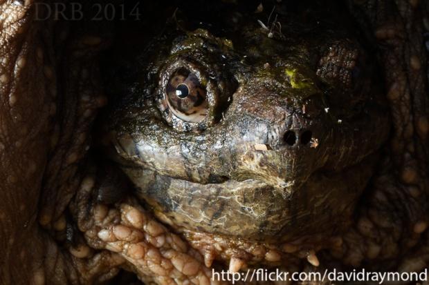 Turtle detail.