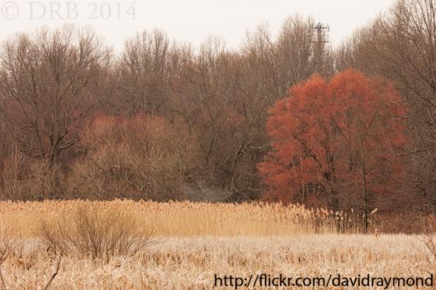 NJ nature scenery