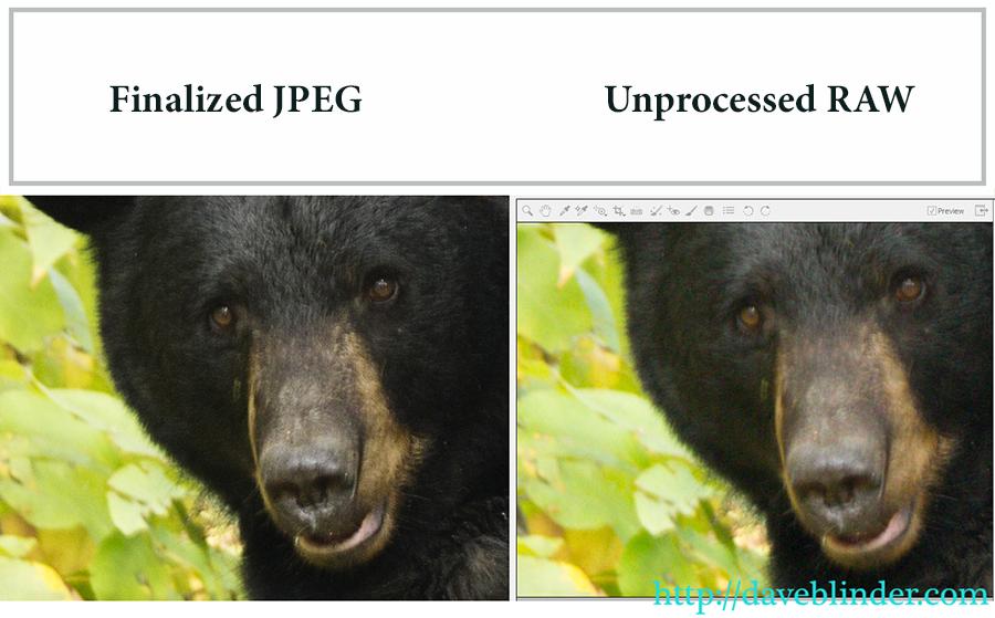 RAW versus JPEG