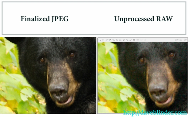 RAW versus JPEG