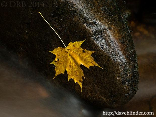 Nature closeup photo of Autumn leaf