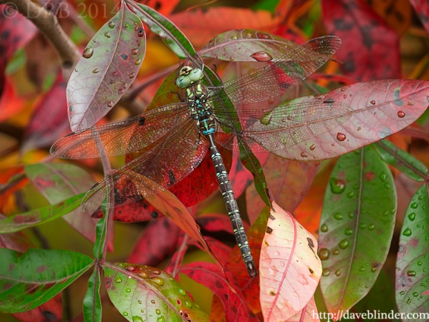 Fall leaves and dragonfly in NJ
