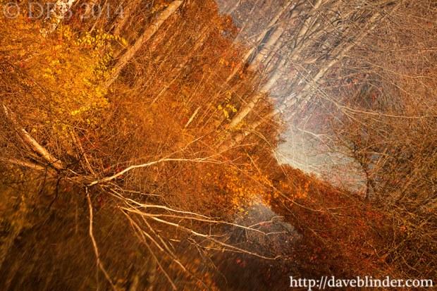 NJ Photographic Art