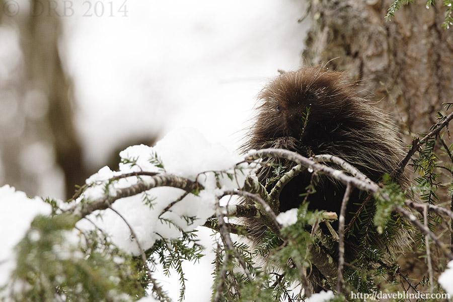 NY Wildlife Photography