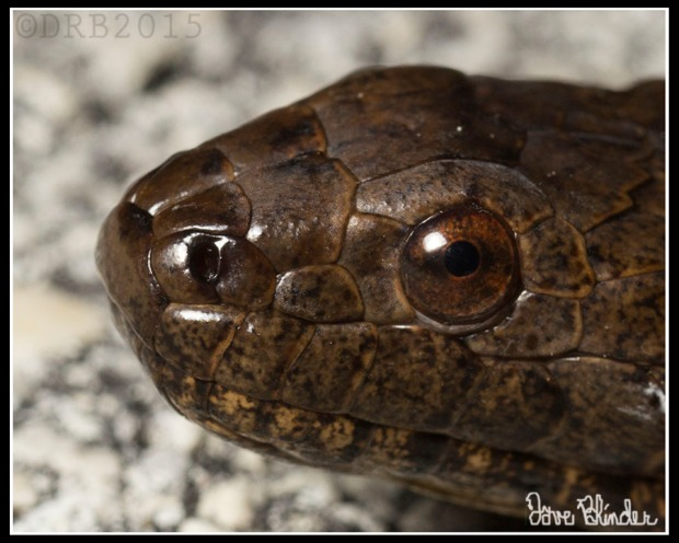FLA Water Snake Crop