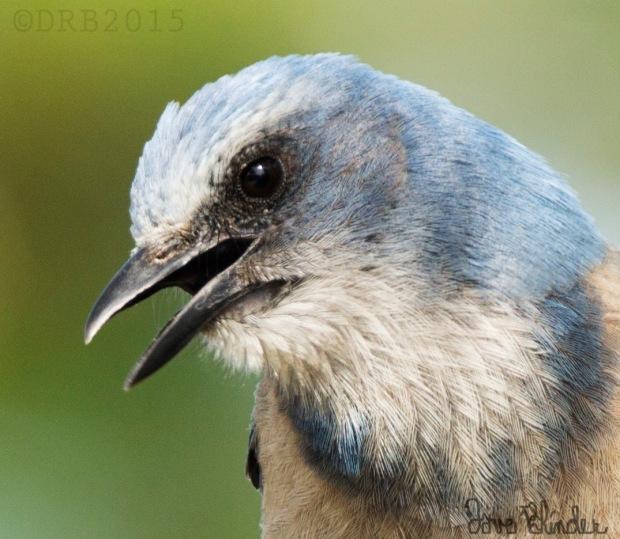 bird photo detail
