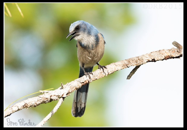 Florida Bird Photo