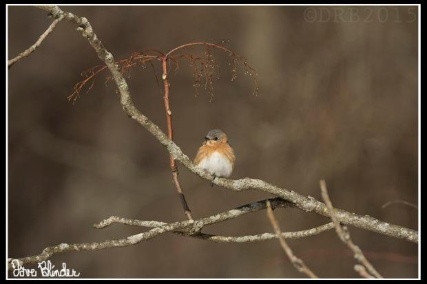 NJ birding