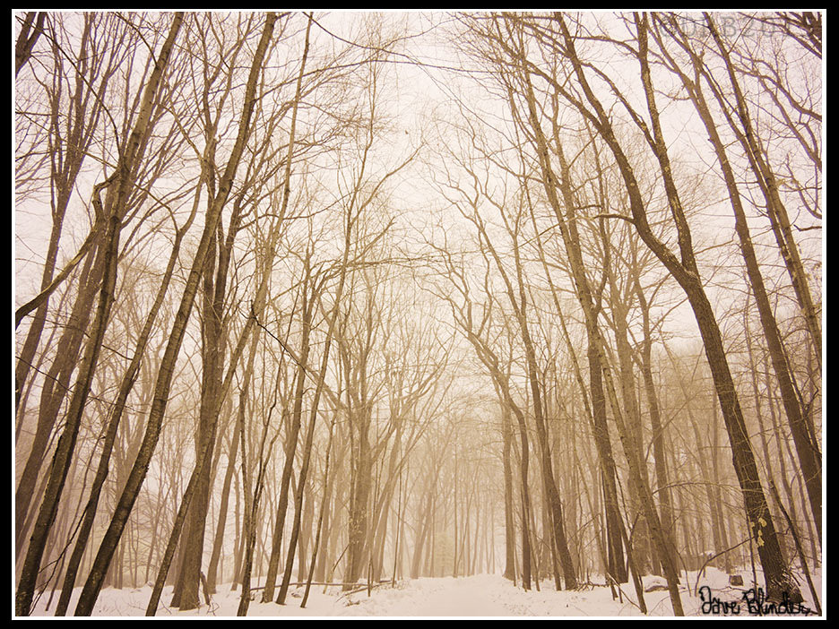 Wooded Road in Winter