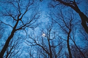 Moon shining in pre-dawn sky. Winter Solstice 2016 Hike by the Morris County Park Commission
