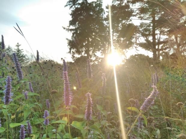 NJ nature picture