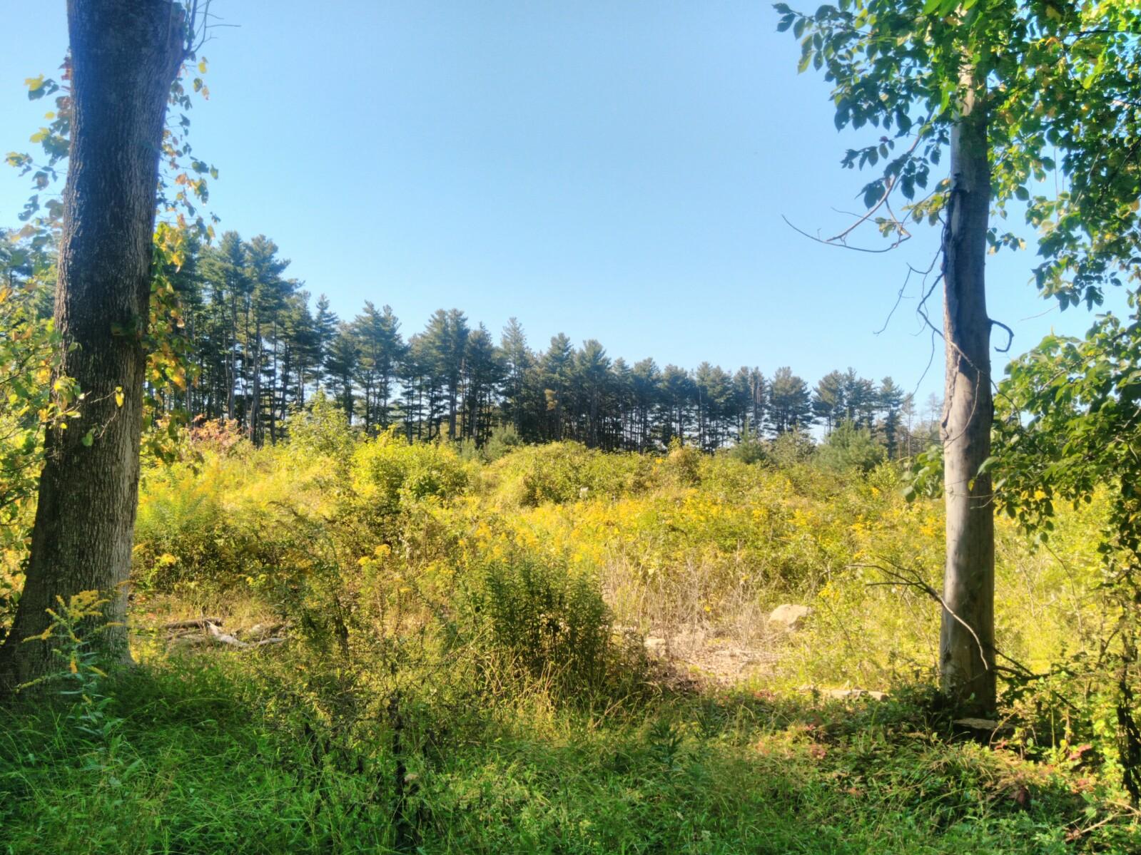 Pine Trees Grove NJ