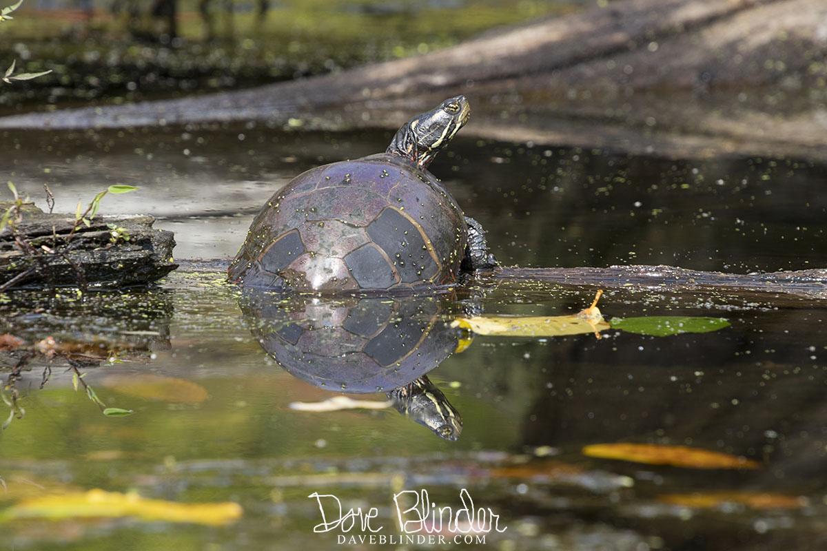 NJ Wildlife Photography
