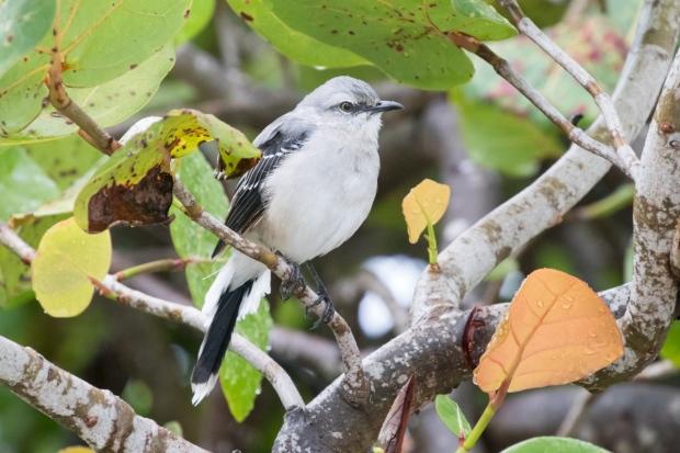 Yucatan birding