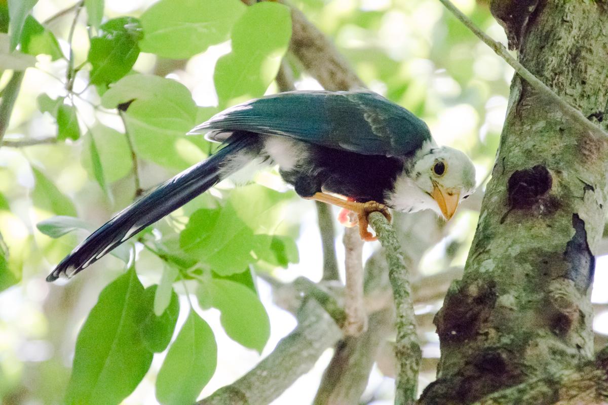 Tulum Mexico Nature Photography