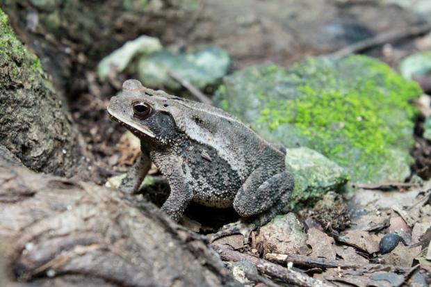Mexico Amphibian