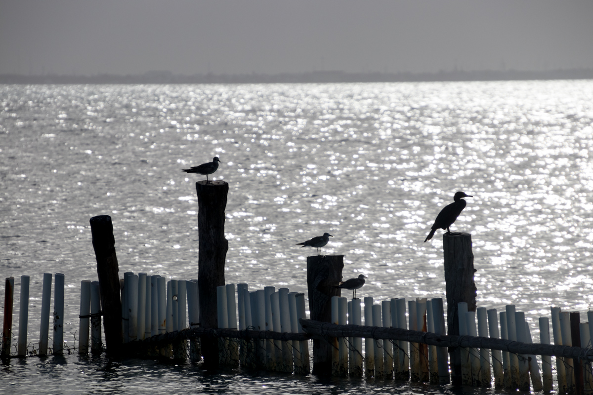 Isla Mujeres birds