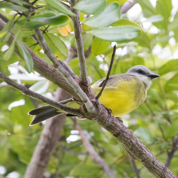 Mexico birding