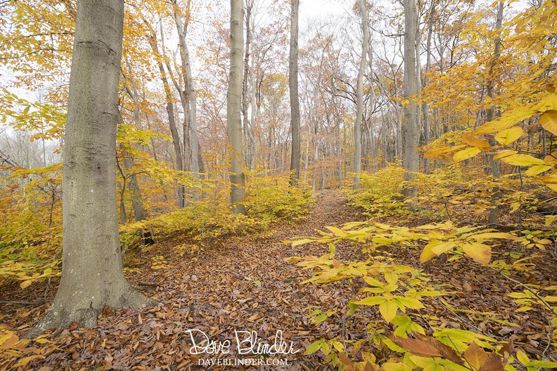 New Jersey Fine Art Landscape Photography by Dave Blinder