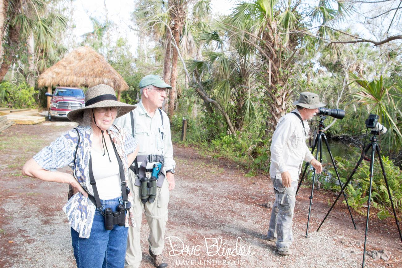 Big Cypress Bend Boardwalk Wildlife Viewing