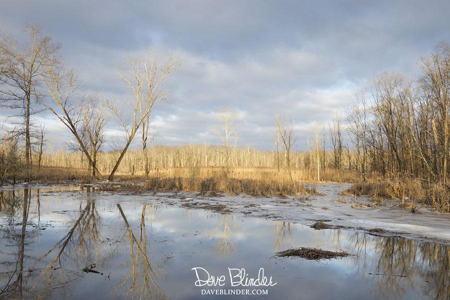 troy meadows wetlands
