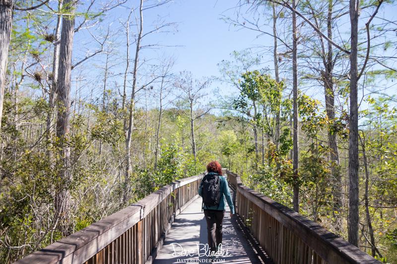 Kirby Storter boardwalk Big Cypress Florida