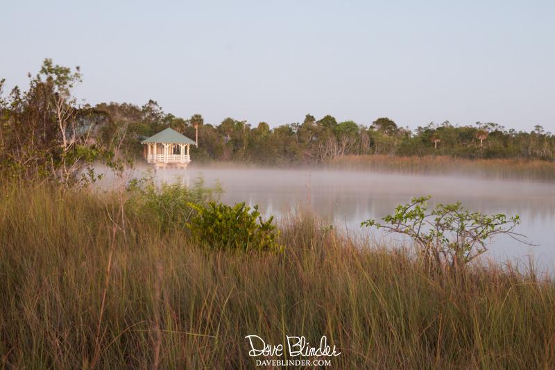 Sunrise at Ernest F Coe Nature Center fog at Everglades