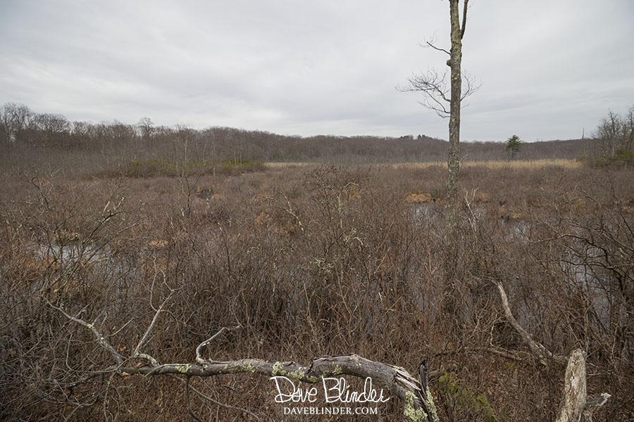 """""""wildcat ridge wildlife management area rockaway township"""""""
