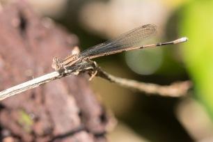 2019POWWW Dragonfly-3883