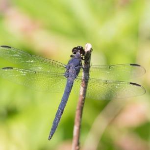 2019POWWW Dragonfly-3896