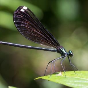 2019POWWW Dragonfly-3926