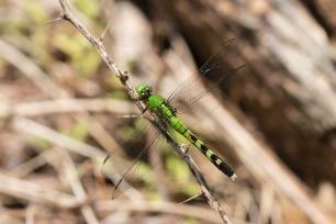 2019POWWW Dragonfly-3971