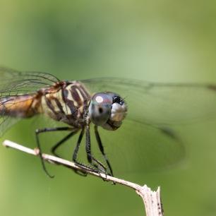 2019POWWW Dragonfly-3989