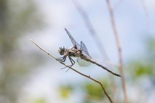 2019POWWW Dragonfly-4010